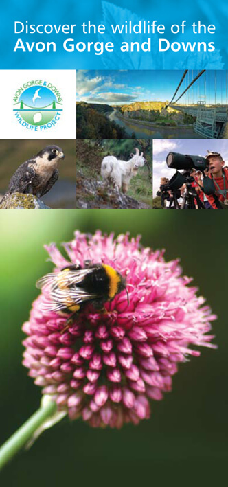 Discover the wildlife of the Avon Gorge and Downs leaflet