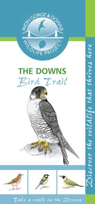The Downs bird trail leaflet