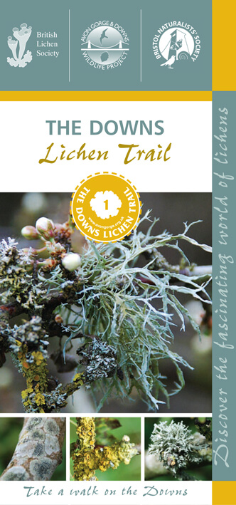 The Downs lichen trail leaflet