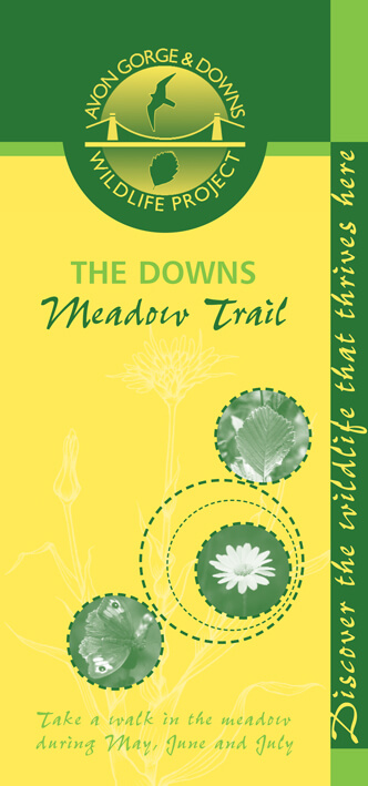 The Downs meadow trail