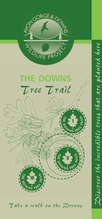 The Downs tree trail