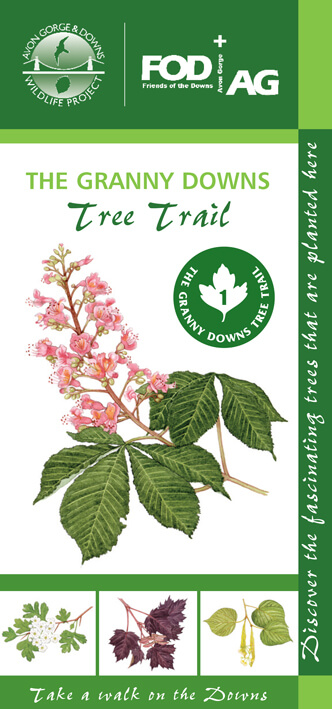 The Granny Downs tree trail leaflet