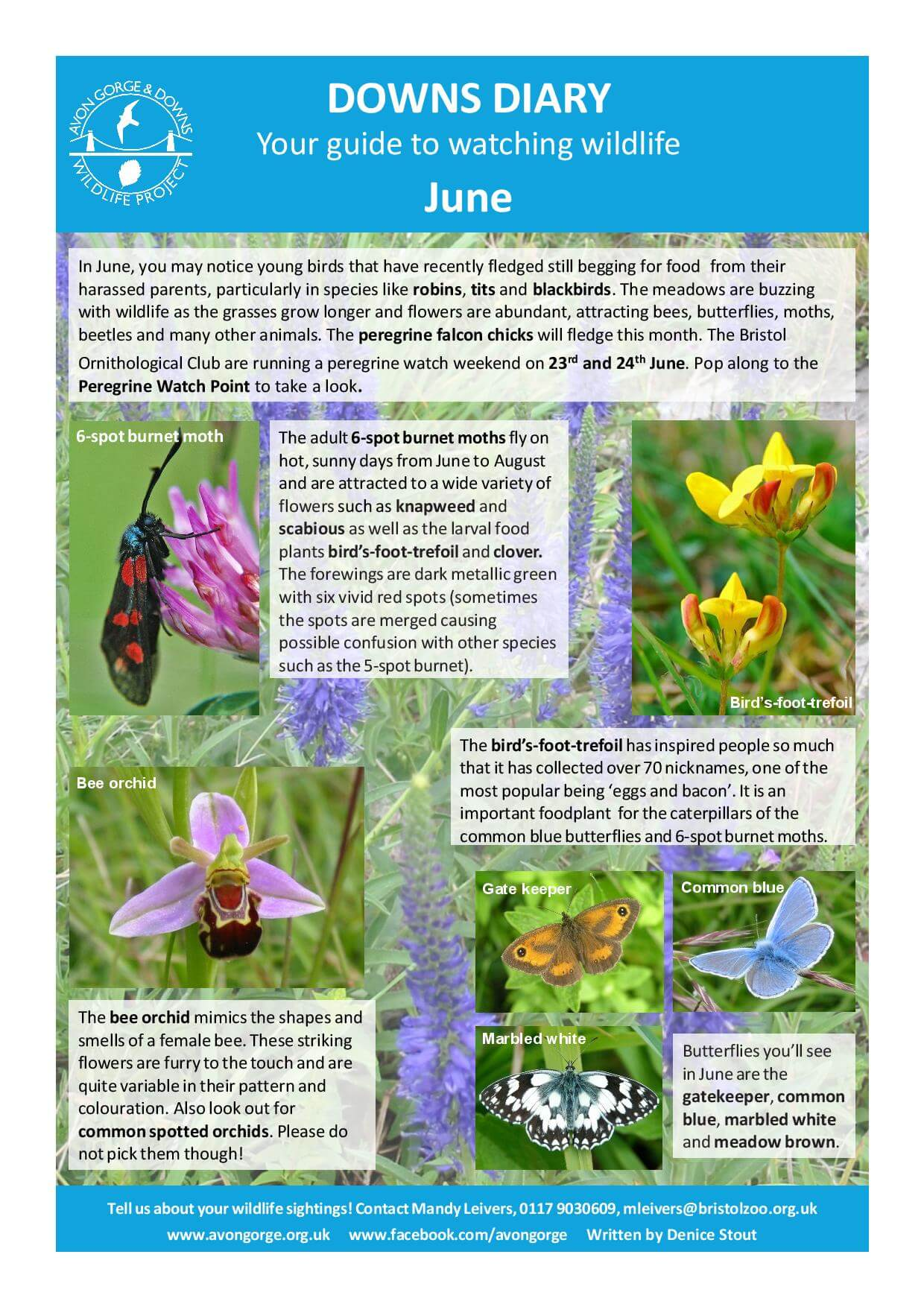 The Downs diary June